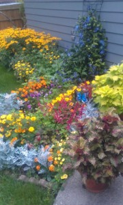 Another shot of the garage flowers in full bloom