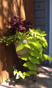 Love my coleus and sweet potato vines.